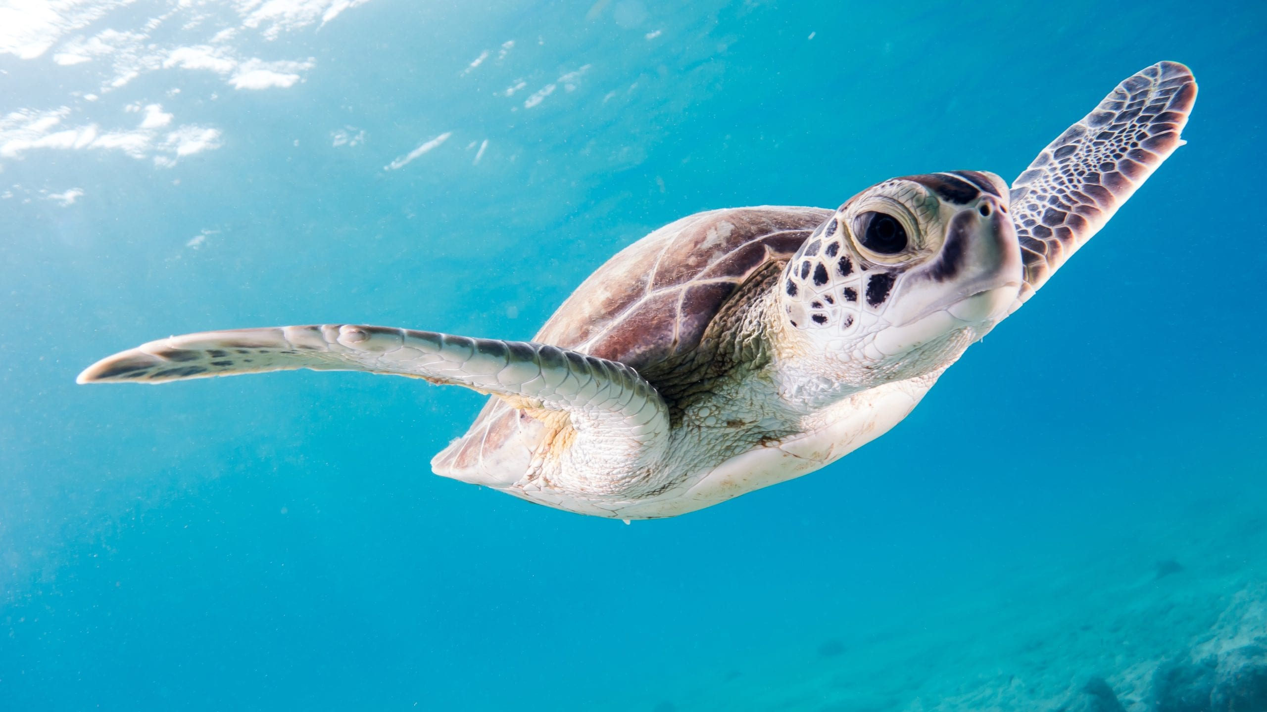How to Build an Ocean Advocate Brand with Sea Turtle Conservation as Purpose